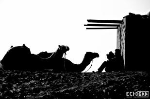 Egyptian Mounties