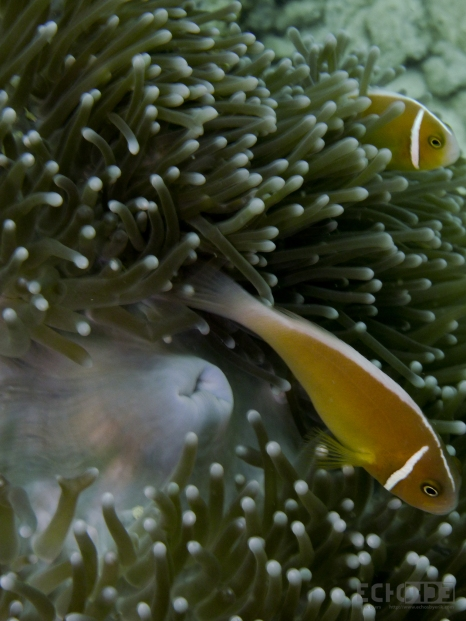 ECHOs - - Papua New Guinea -_-3