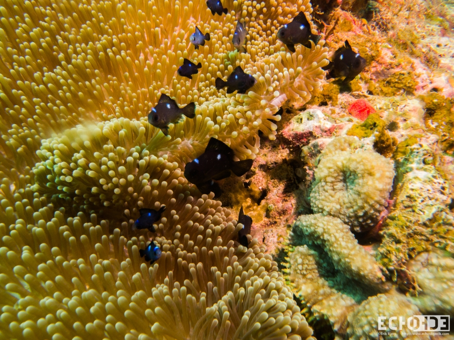 ECHOs - Beqa Lagoon - Fiji -_-2