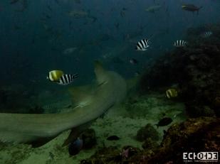 ECHOs - Beqa Lagoon - Fiji -_-5