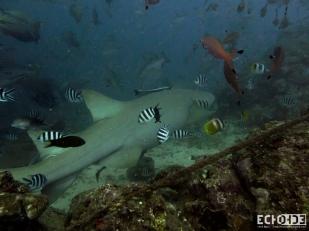 ECHOs - Beqa Lagoon - Fiji -_-6