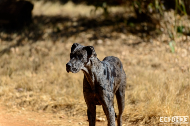 ECHOs - Cullinan Rifilwe - South Africa -_-15