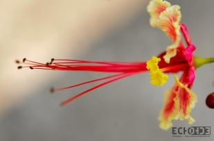 ECHOs - - Democratic Republic of Congo -_-3
