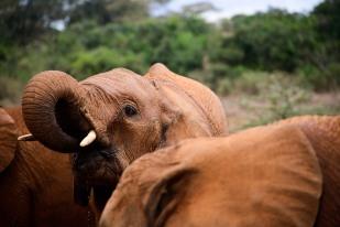 ECHOs - Nairobi - Kenya -_-17