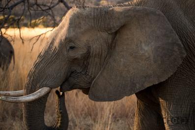 The Thinking Elephant